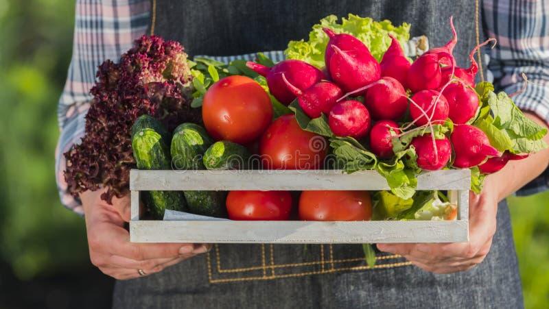 Een landbouwer houdt een houten doos met een reeks verse rijpe groenten van zijn tuin Selectieve nadruk stock afbeelding