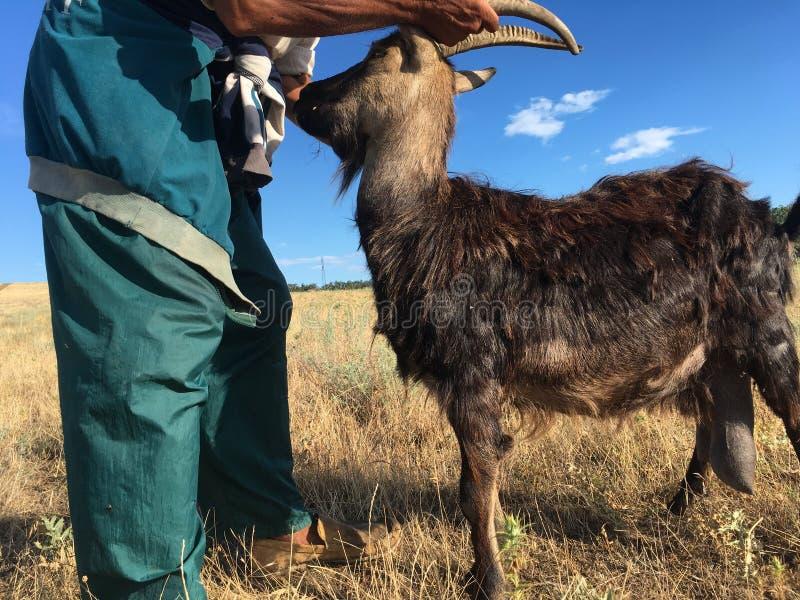 Een landbouwer met een geit royalty-vrije stock foto