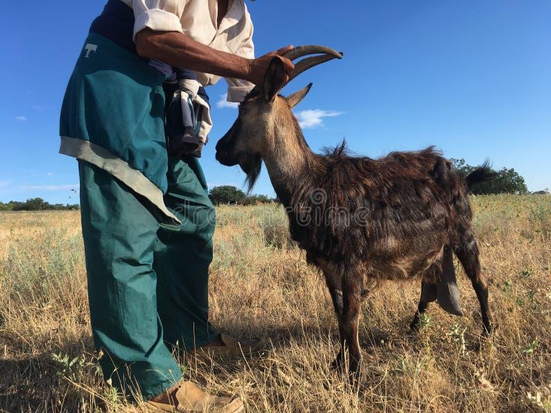 Een landbouwer met een geit stock afbeeldingen