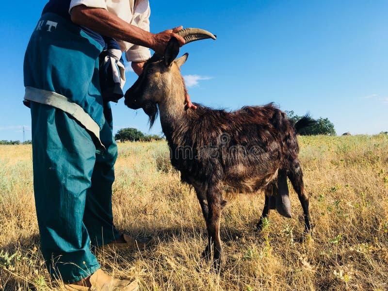 Een landbouwer met een geit royalty-vrije stock foto's