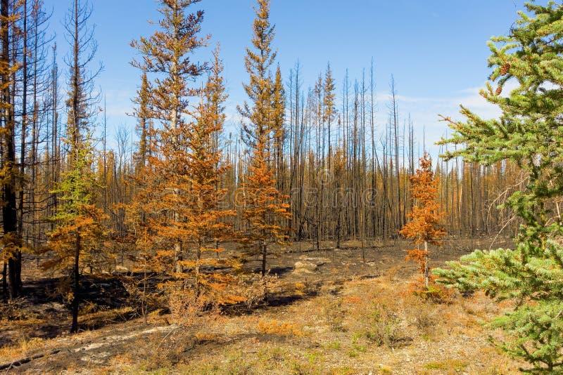 Een landschap door brand in noordelijk Canada gedeeltelijk wordt verwoest dat royalty-vrije stock afbeelding