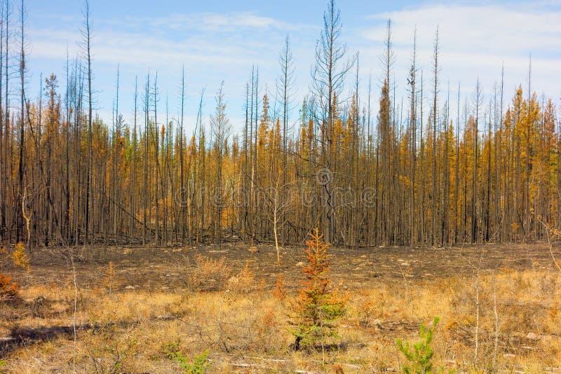 Een landschap door brand in noordelijk Canada gedeeltelijk wordt verwoest dat stock afbeeldingen