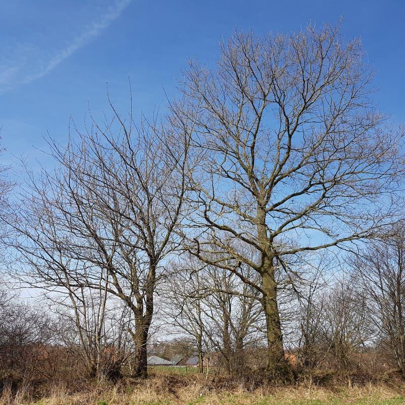 Een landschap met een haagmuur in de lente stock afbeeldingen