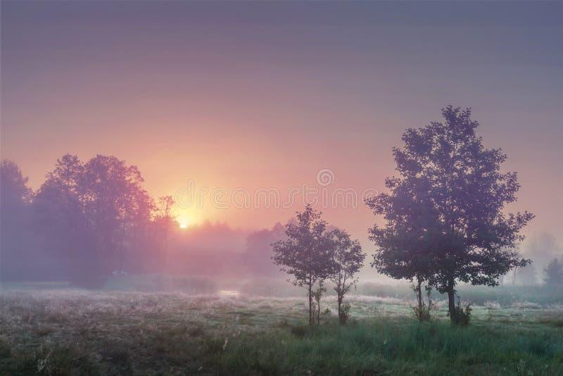 Een landschap van de zomerzonsopgang in nevelige ochtend met kleurrijke hemel op de horizon Toneellandschap van aard in een weide stock foto