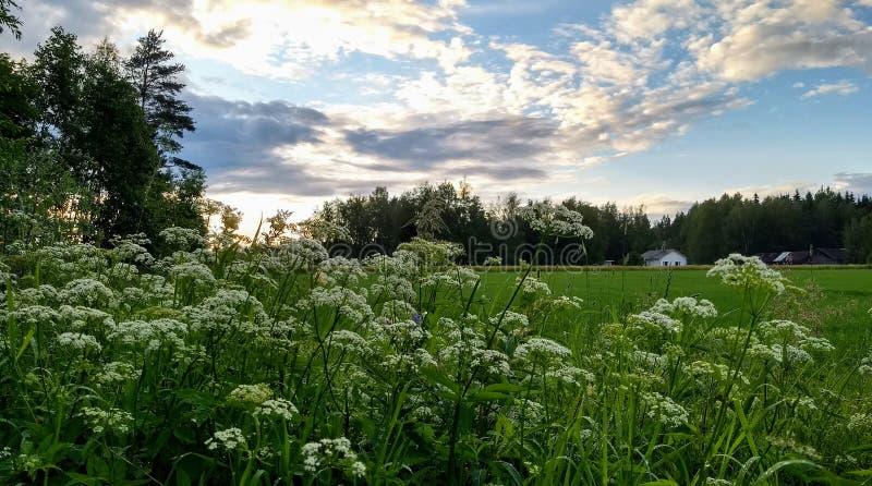 Een landschap van het land bij de zomer stock foto
