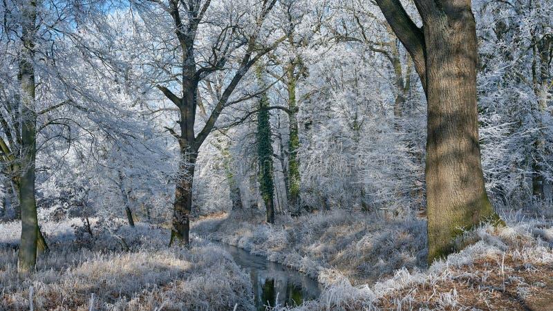 Een landschap van een prachtig berijpt park stock afbeelding