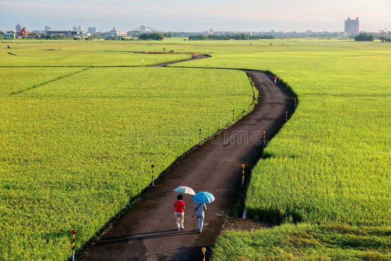 Een landweg die door de gouden padievelden in Ilan Taiwan winden stock foto