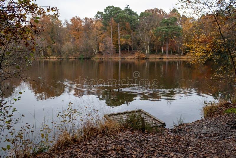 Een late herfstdag in Buchan Park Crawley, Verenigd Koninkrijk royalty-vrije stock foto