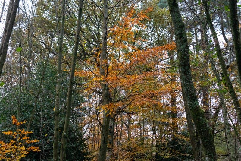 Een late herfstdag in Buchan Park Crawley, Verenigd Koninkrijk royalty-vrije stock fotografie