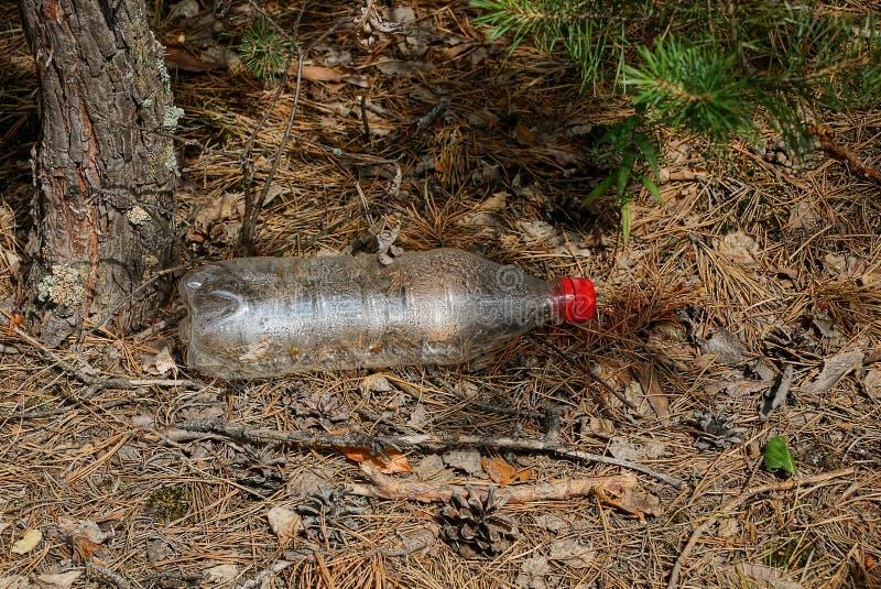 Een lege plastic fles ligt op een bruine droge naald en kegels in het bos stock afbeeldingen