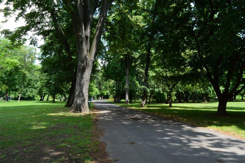 Een lege weg in het park stock foto's