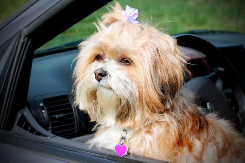 Doggie in het venster. royalty-vrije stock afbeelding