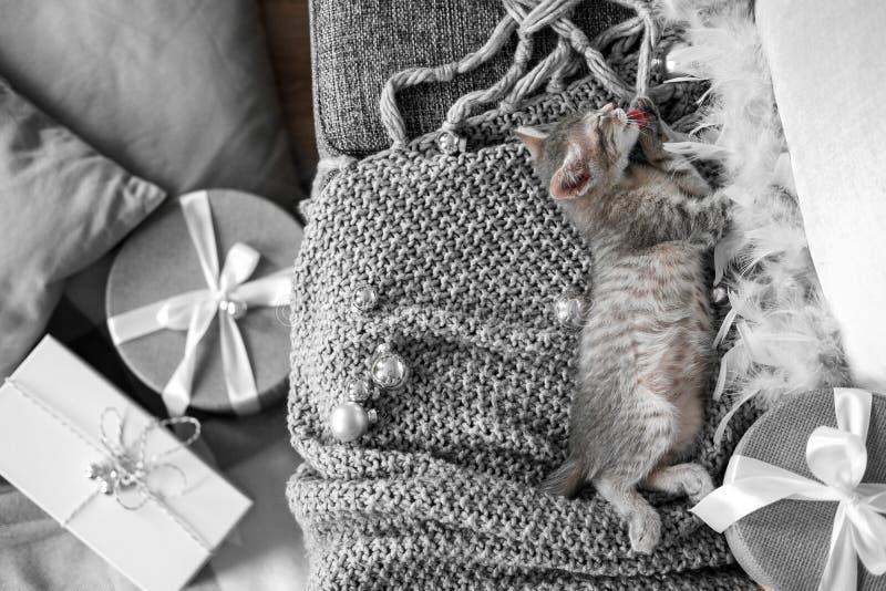 Een leuk grijs katje ligt op een grijze plaid in een Kerstmisdecoratie stock foto's