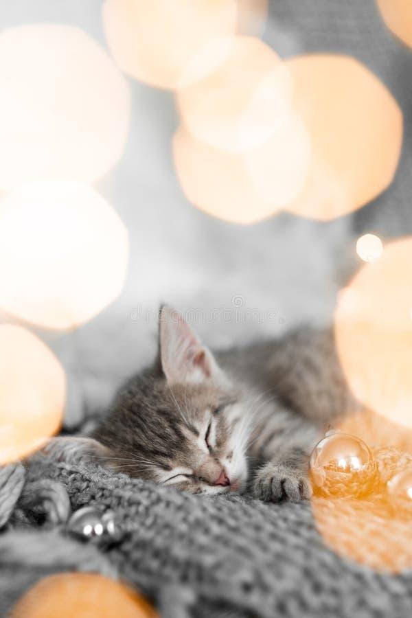 Een leuk grijs katje ligt op een grijze plaid in een Kerstmisdecoratie tegen een achtergrond van lichten stock foto's