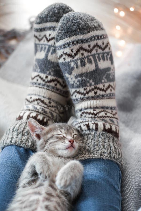Een leuk grijs katje rust op een plaid Kerstmislichten op de achtergrond royalty-vrije stock foto's