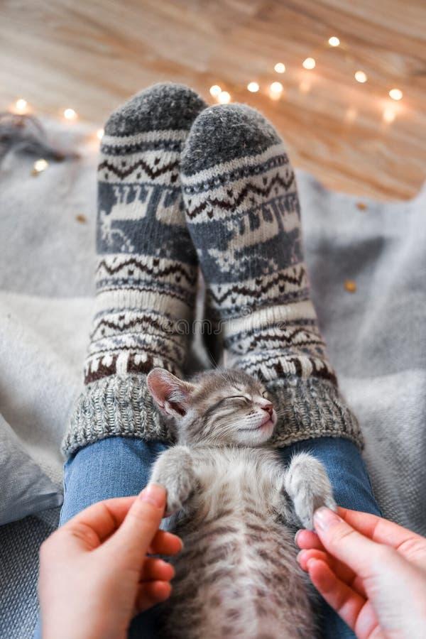 Een leuk grijs katje rust op een plaid Kerstmislichten op de achtergrond stock afbeeldingen