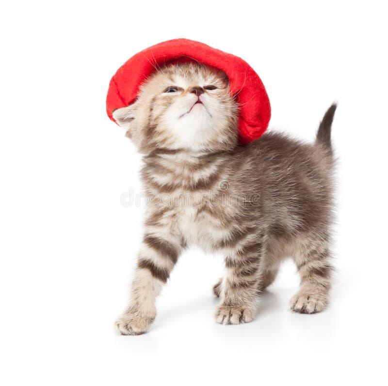 Een leuk katje in een rode hoed royalty-vrije stock afbeelding