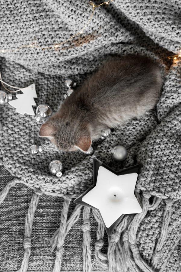 Een leuk katje rust op een grijze plaid in de Kerstmisdecoratie royalty-vrije stock foto's