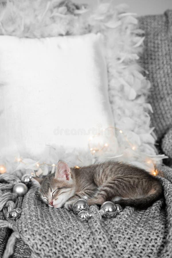 Een leuk katje rust op een grijze plaid in de Kerstmisdecoratie royalty-vrije stock foto