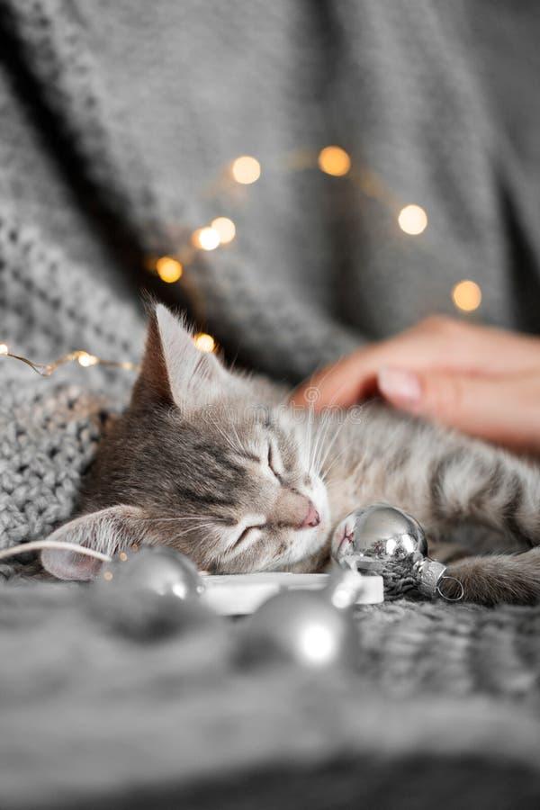 Een leuk katje rust op een grijze plaid in Kerstmisballen royalty-vrije stock foto's