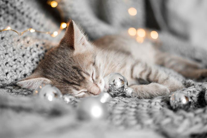 Een leuk katje rust op een grijze plaid in Kerstmisballen stock fotografie
