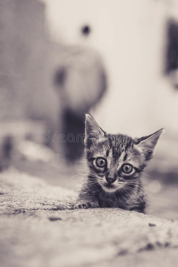 Een leuke blik van een kat royalty-vrije stock afbeeldingen