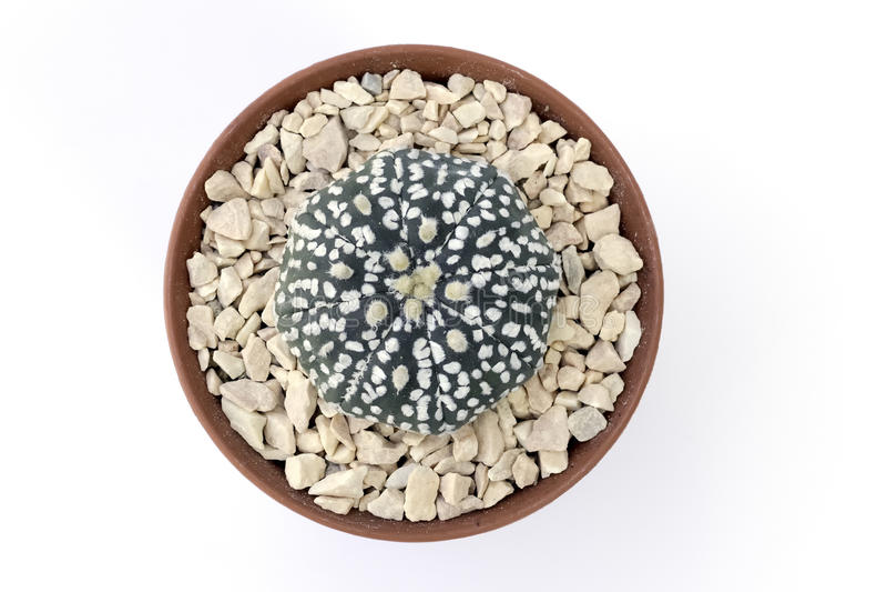 Een leuke cactus royalty-vrije stock afbeelding
