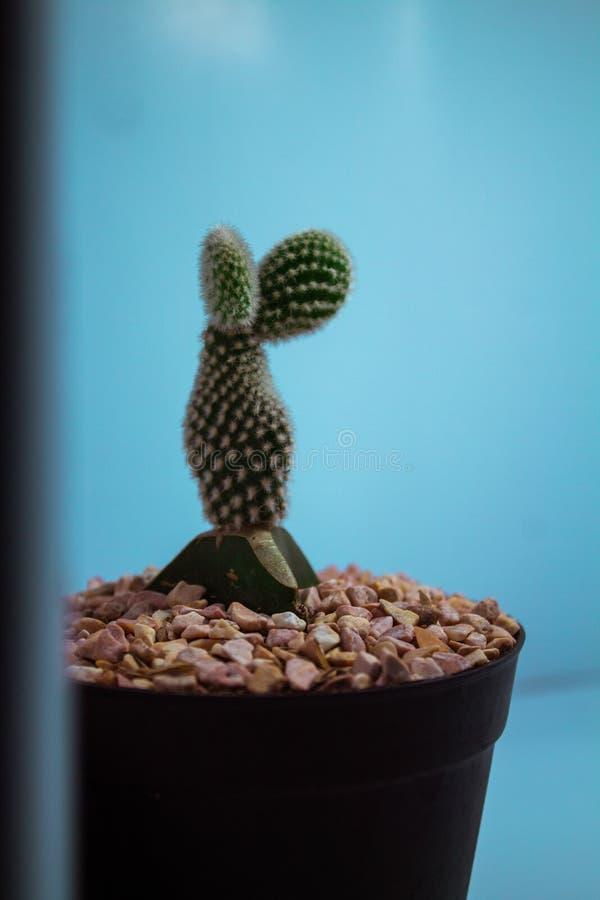 Een leuke cactus in een pot stock foto