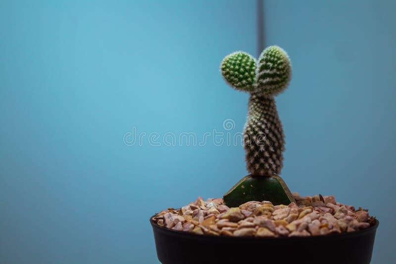 Een leuke cactus in een pot royalty-vrije stock afbeeldingen