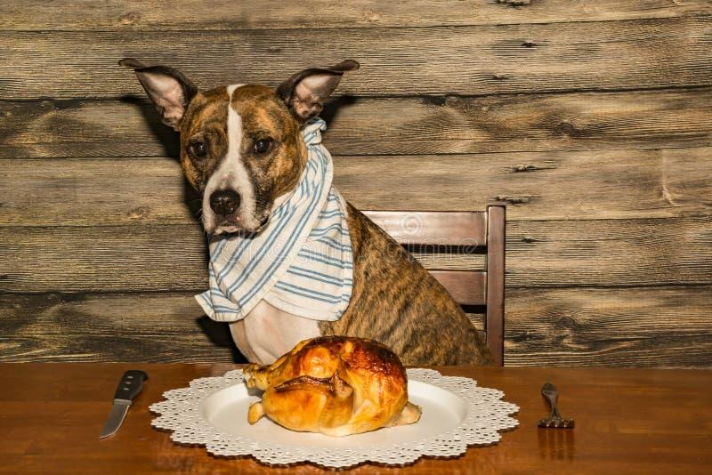 Een leuke hond die voor Diner bedelen stock foto's