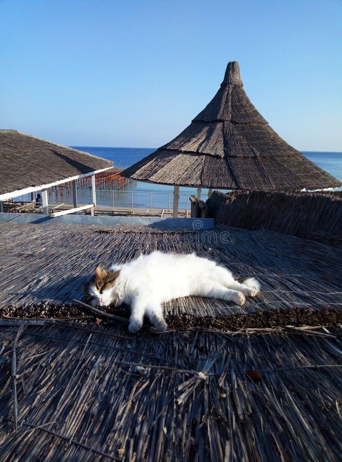 Een leuke kat legt op een strodak royalty-vrije stock fotografie