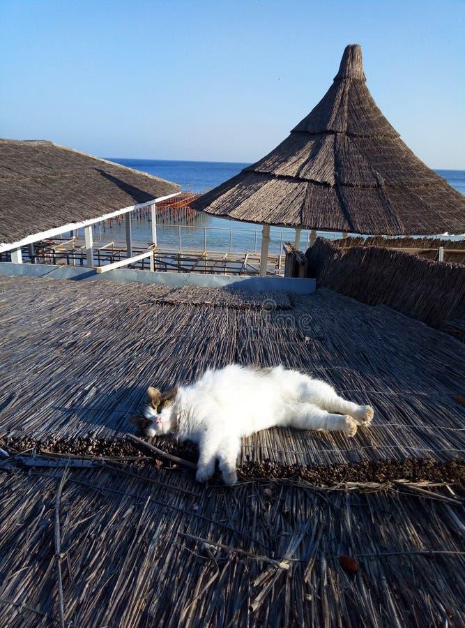 Een leuke kat legt op een strodak royalty-vrije stock afbeeldingen