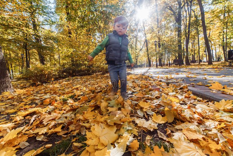 Een leuke kleine jongen die pret in het park in de herfst hebben stock afbeelding