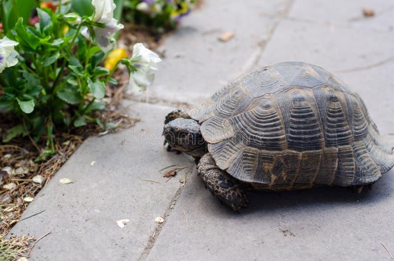 Een leuke schildpad royalty-vrije stock afbeelding
