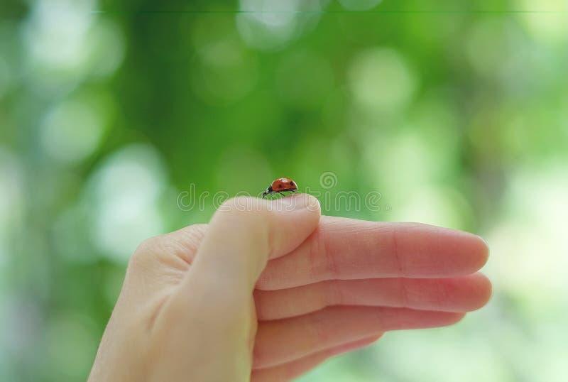 Een lieveheersbeestje op de hand stock fotografie