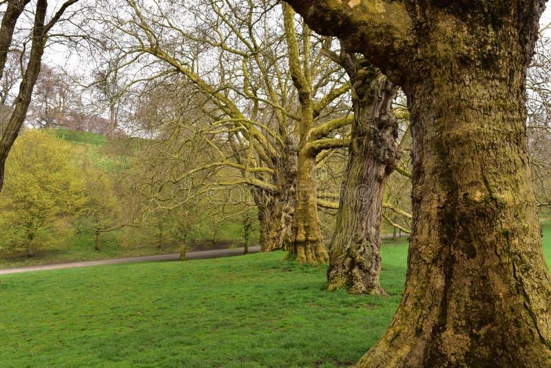 Download Een Lijn Van Eiken Bomen In Het Park Van Greenwich Stock Foto - Afbeelding bestaande uit lijn, landschap: 114225456