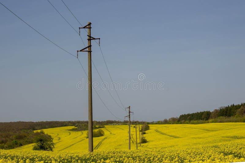 Een lijn van elektrische polen met kabels van elektriciteit op een verkrachtingsgebied met een bos op achtergrond stock afbeelding