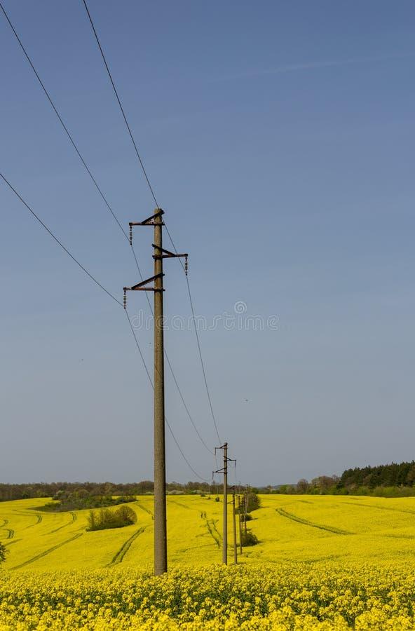 Een lijn van elektrische polen met kabels van elektriciteit op een verkrachtingsgebied met een bos op achtergrond stock fotografie