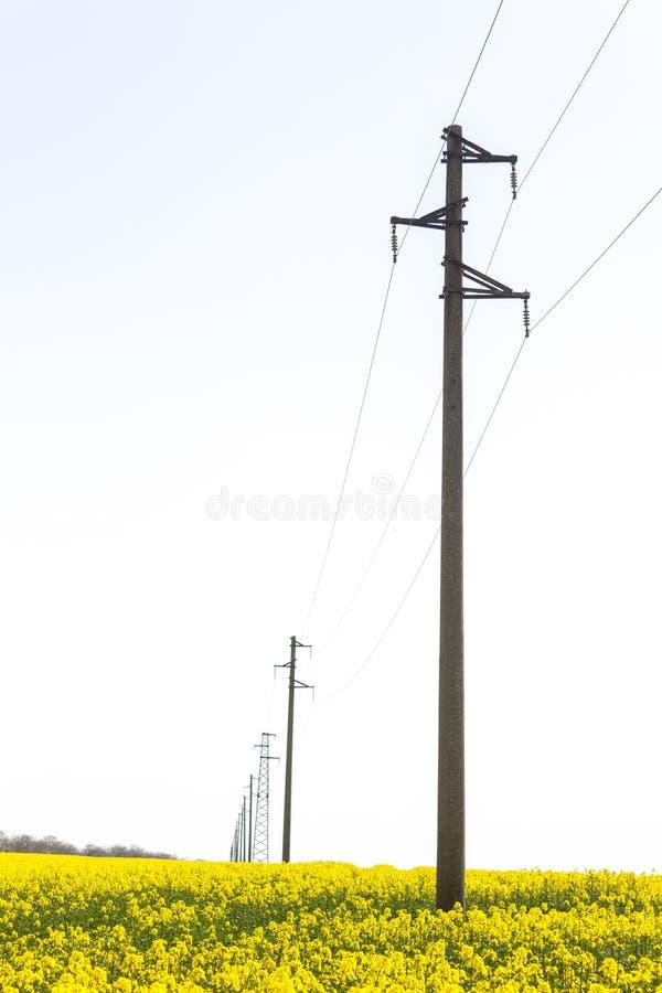 Een lijn van elektrische polen met kabels van elektriciteit op een verkrachtingsgebied met een bos op achtergrond stock foto's