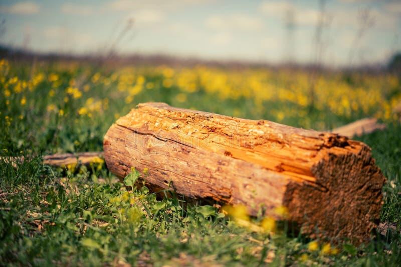 Een logboek van hout op het gras in de zomer stock fotografie
