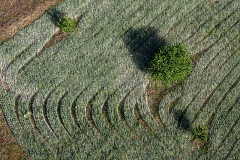 Een luchtfoto bij zonsopgang van een gebied van korrel het groeien dichtbij Goreme in Turkije royalty-vrije stock foto