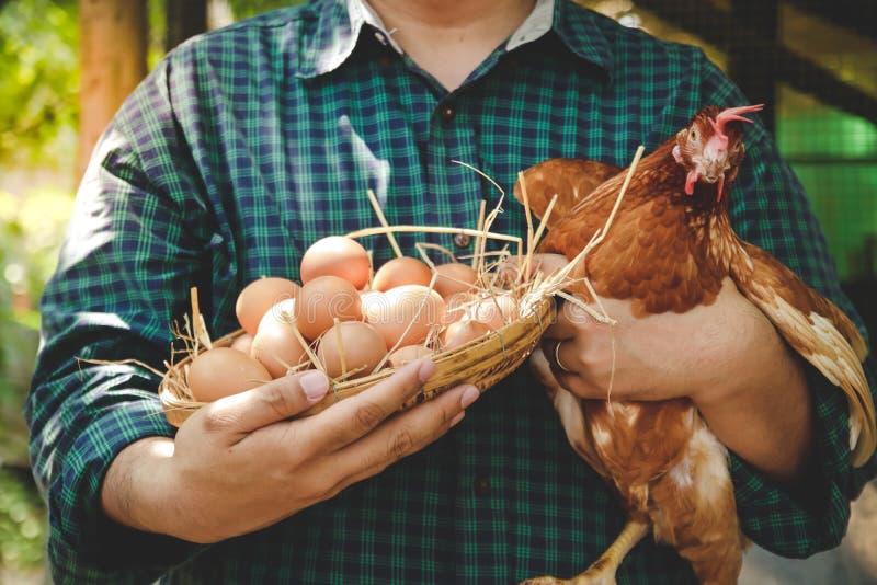 Een man met een eiermand en een kip stock foto's