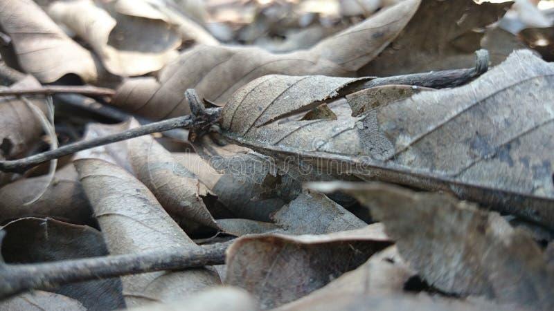 Een mangrove royalty-vrije stock foto's