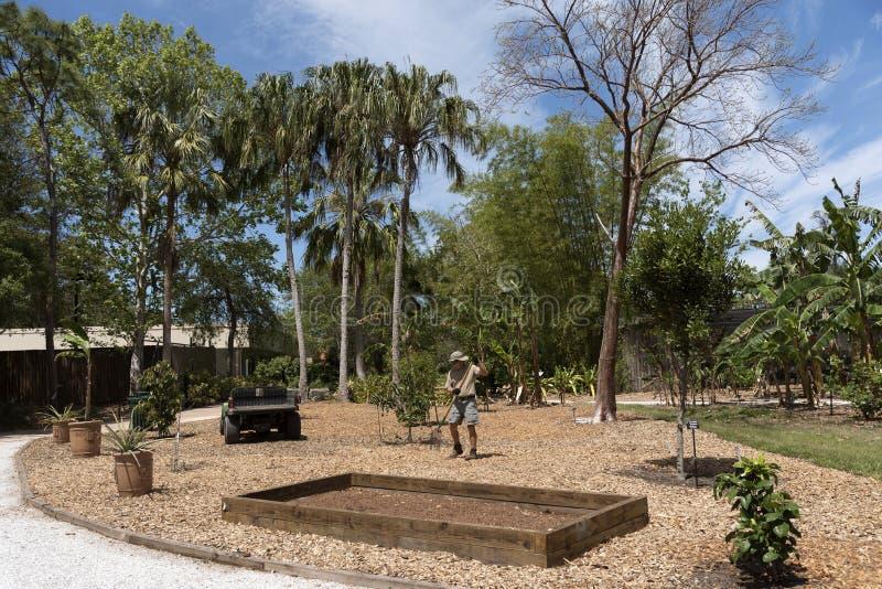 Een mannelijke vrijwilliger die in een botanische tuin werken stock fotografie