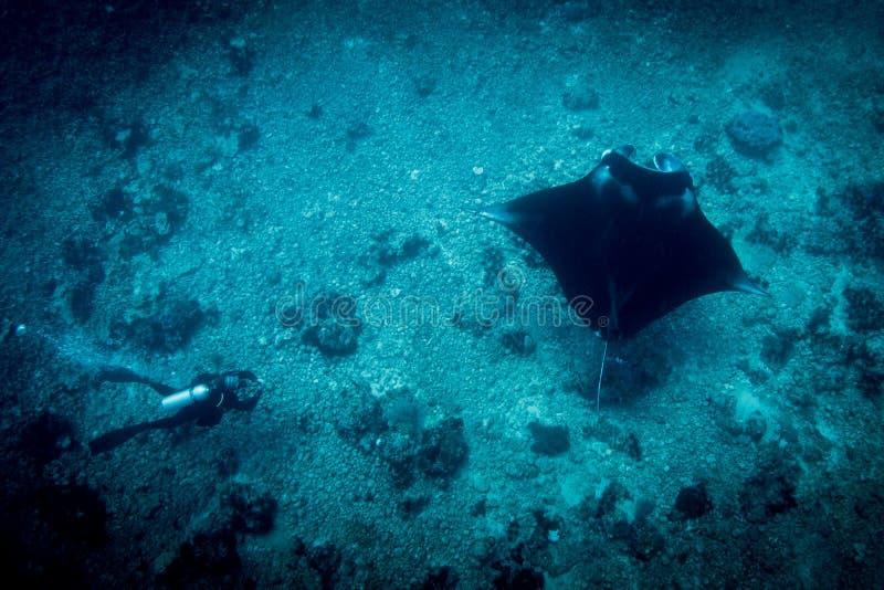 Een Manta Ray en een duiker bij manta richten royalty-vrije stock afbeeldingen