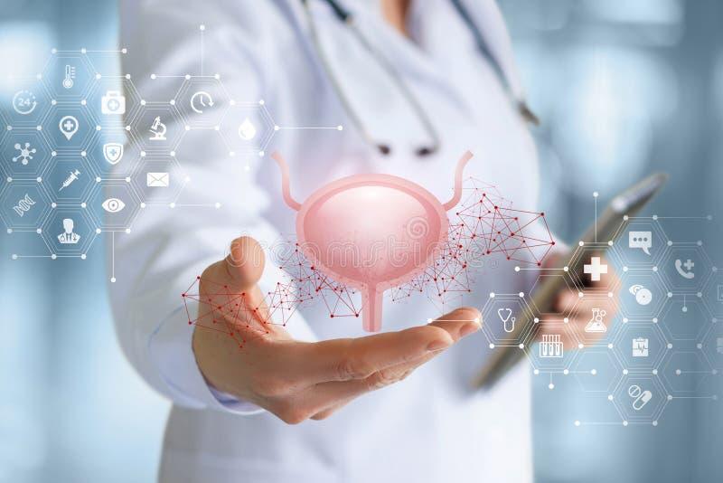 Een medische arbeider toont de blaas stock fotografie