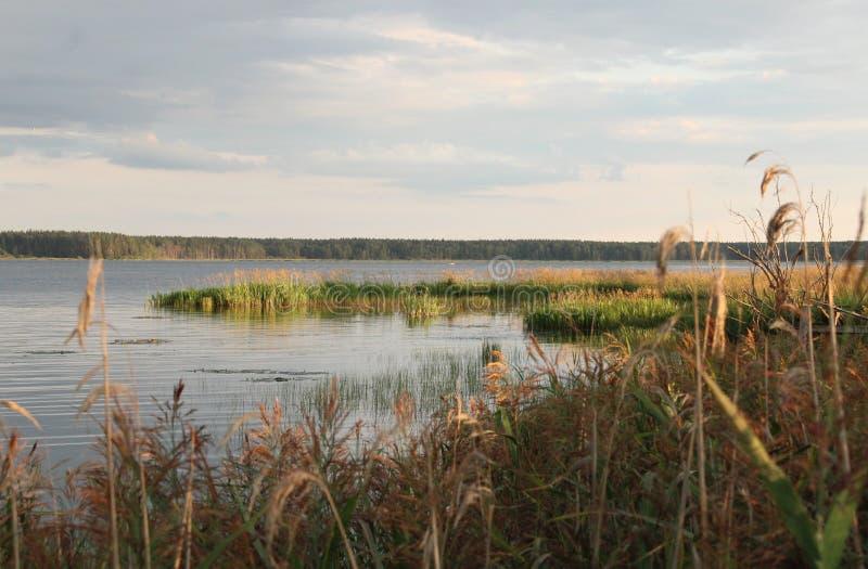 Een meer in de avond stock afbeelding