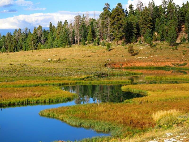 Een meer in Dixie National Forest royalty-vrije stock afbeelding