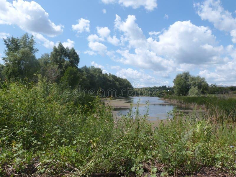 Een meer in het midden van bomen en gras royalty-vrije stock foto's