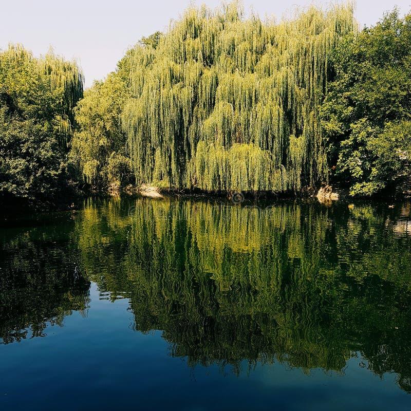 Een meer in het park stock afbeeldingen